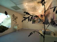 Butterflies Shift North - Installation View
