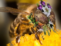 Bee with midacloprid Mask