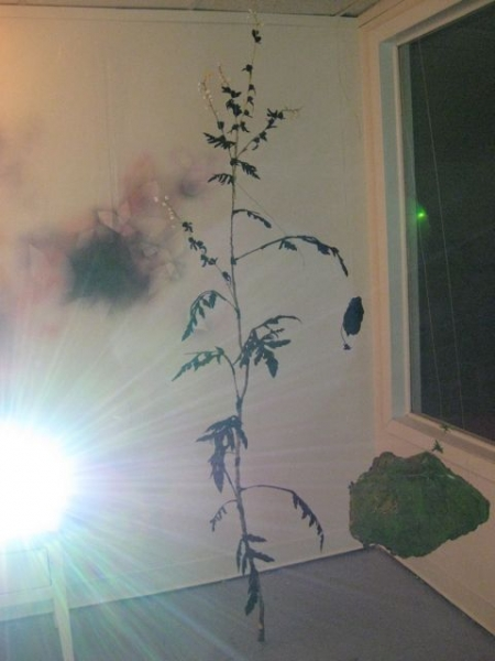 """Ambrosia artemisiifolia: common ragweed"" wall painting"